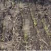 Обследованиепосевов озимой пшеницы