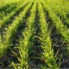 Предложения для сельскохозяйственных товаропроизводителей, направленных на нивелирование дефицита влаги при планировании сева озимой пшеницы под урожай 2022 г.